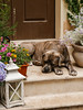 Sogni d'oro (frillicca) Tags: 2018 animal animale april aprile cane dog ferrara panasoniclumixlx100 relax riposo emiliaromagna italia