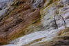 Palette Spring (mariola aga) Tags: yellowstonenationalpark wyoming mammothhotspringsterraces palettespring deadtrees mineraldeposition layers closeup nature thegalaxy infinitexposure coth coth5