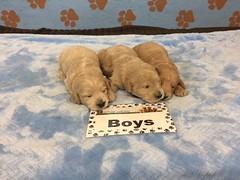 Roxie Boys 6-2