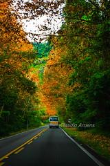 Cores de Outono (Claudio Arriens) Tags: outono autumn colors cores serra riograndedosul brasil canoneos40d carlzeissjenatessar50mm czj tessar manuallens m42