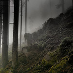 Bergwald im Nebel thumbnail