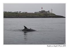 20180607_09462_dauphins_saint_mathieu_1200px (ge 29) Tags: bretagne breizh finistere plougonvelin le conquet dauphin poisson saintmathieu semaphore