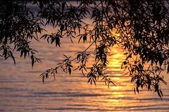 Through the Leaves (Karen_Chappell) Tags: sunset orange leaves tree travel ottawa ontario evening water river ottawariver canada silhouette