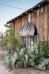 Cactus and Window (bugeyed_G) Tags: benson arizona southwest pricky pear cactus ocotillo clapboard house desert architecture