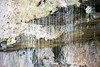 Australia_2018-174.jpg (emmachachere) Tags: subtropical trees hike waterfall boatride springbrook australia rainforest kanagroo animals koala brisbane boat lonepinekoalasanctuary