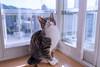 _NCL7098-Edit (chitoroid) Tags: nikond750 afsnikkor2470mmf28ged japan hokkaido sapporo cat