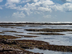 Fitzgerald Marine Reserve tide pools (aweiss.sf) Tags: fitzgeraldmarinereserve landscape olympus omdem5 pacificocean tidepools
