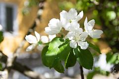 Summer day (jannaheli) Tags: suomi finland helsinki arabianranta luonto nature nikond7200 valokuvaus photoshooting photographing spring