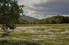 myrull (KvikneFoto) Tags: nikkorh mf landskap natur norge hedmark kvikne