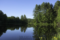 After the cool rain of the morning (renrus06) Tags: landscape photography spring settingsun pond reflections shadows springgreen cloudless bluesky
