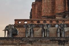 Wat Chedi Luang (Thomas Mülchi) Tags: chiangmai chiangmaiprovince thailand 2018 buddhism buddhisttemple temple elephants sunny changwatchiangmai th dusk