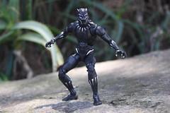 Wakanda Forever (westhl) Tags: black panther marvel cinematic universe tchalla wakanda forever action figure toy toys legends movie photography photo