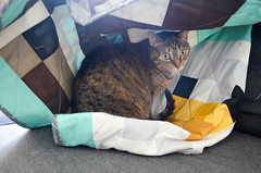 The cat enjoys the new baby quilt! (osiristhe) Tags: cat dizzy quilt sewing quilting nikond5100 18200mm