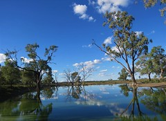 Billabong (tom_2014) Tags: water sky sun coolibah eucalyptus eucalypt billabong travel landmark tree creek farm nsw newsouthwales landscape view scenic outback moree australia australian cloud