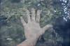 L'essere animale: III (Silvia Kuro) Tags: hand primitive primitivism primitivo primordial primeval water pagan nature natura stream river mano wild wilderness spiritual analog