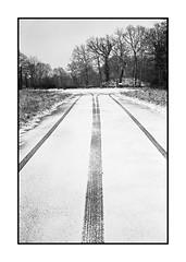Divergence (Oeil de chat) Tags: nb bw monochrome film pellicule argentique 35mm voigtlander bessa r2a colorskopar kodak trix rodinal hiver neige paysage traces divergence silence