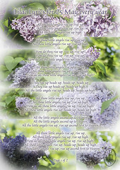 Lilac Lyrics for 25 May every year page 1 of 2 (PHH Sykes) Tags: alzheimers disease dementia sir terry pratchett lilac 25 may every year night watch thepeoplesrevolutionoftheglorioustwentyfifthofmay lyrics thepeoplesrepublicoftreaclemineroad samvimes johnkeel remember memory past present commemoration celebration