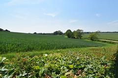 Layham, Suffolk (James Mans) Tags: nikon d5500 countryside green pleasant land trees fields 1020mm england layham suffolk garden sky grass field flower tree