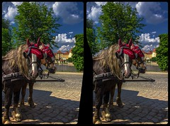 Horses waiting 3-D / CrossView / Stereoscopy / HDR / Raw (Stereotron) Tags: saxony sachsen moritzburg horse pferde strase street castle tourism europe germany deutschland crosseye crossview xview pair freeview sidebyside sbs kreuzblick 3d 3dphoto 3dstereo 3rddimension spatial stereo stereo3d stereophoto stereophotography stereoscopic stereoscopy stereotron threedimensional stereoview stereophotomaker stereophotograph 3dpicture 3dimage twin canon eos 550d yongnuo radio transmitter remote control synchron kitlens 1855mm tonemapping hdr hdri raw