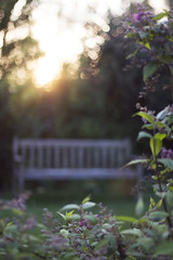 (Girl With Butterfly Wings) Tags: bench goldenhour evening light bokeh trees plant nature