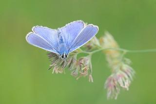 Blue..........