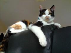 Cass2008-175.JPG (h3pat1c) Tags: cats animals cass cat
