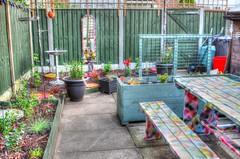 New Garden Nearly Done (ihughes22) Tags: garden hdr mygarden whiston ihughes22 nikon plants recycling paint spraycan bugs colour trellis soil