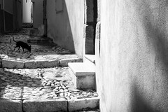 (Roberto Spagnoli) Tags: dog biancoenero blackandwhite fotografiadistrada streetphotography monocromo shadow puglia italy sud south canon