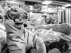 Tiger in a shop (Shahrear94) Tags: bangladesh market toy tiger blackandwhite blackwhite black monochrome monochromatic mono dhaka shop light juxtaposition contrast concept unexpected eye vendor flicker memoirs looking openly fluffy cotton real