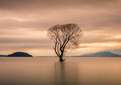 Motu Rakau Maunga Taupo (ajecaldwell11) Tags: xe3 sunrise ankh water fujifilm light trees newzealand taupotree tree willow sky longexposure laketaupo caldwell clouds dawn