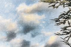 Dream (p) (davidseibold) Tags: america bakersfield california cloud jfflickr kerncounty nature painting photosbydavid plant platoct postedonello postedonflickr sky tree unitedstates usa