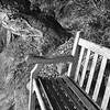 Bosky Bench (Melinda Stuart) Tags: hbm ucbg tree garden wood bench bosky bosque bark structure lines