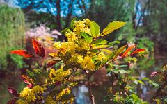 201804200674 (Leow Sama) Tags: claude monet deau watergarden giverny flowers jardin fleur arbre