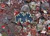 Clam 11 (Petter Thorden) Tags: diving indonesia gili trawangan underwater clam