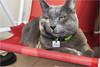 Zafira (Lucio_Vecchio) Tags: zafira cats gatos gris mascotas friends amigos retratos nikon d5500 argentina