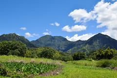 DSC33_18574 (heartinhawaii) Tags: kauai northkauai kuhiohighway princeville hawaii mountains landscape roadside mountainscape nature lush tropical green nikond3300