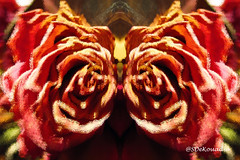 Dried Roses #abstract (Stephenie DeKouadio) Tags: abstractpainting abstractflower abstract abstractart abstractflowers art artistic hypnotique flowerspainting flowerpainting flowers flowersabstract flowerabstract flower macro macropainting macroabstract painting
