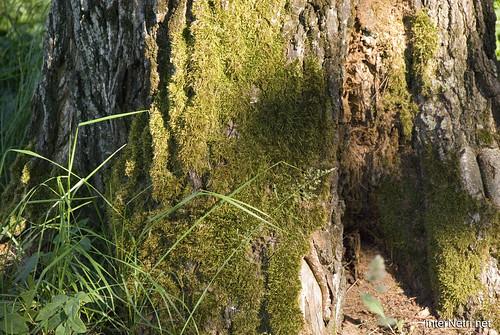 Шацький Національний Природний Парк Озеро Пісочне Стовбури дерев InterNetri  Ukraine 379