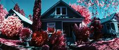 29th Ave. Portland (Blurmageddon) Tags: 35mm filmphotography kmzhorizont panoramic panorama colorinfrared kodak fpp infrared infrachrome e6 pakonf135 nexlab oregon eir surreal yellowfilter