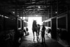 cool down (Jen MacNeill) Tags: horse horses warmblood equine equestrian bnw blackandwhite barn stable light silhouette
