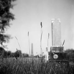First King Baptist cemetery, Hammertown (Richard Wintle) Tags: squareformat square 6x6 120 mf mediumformat film rollei rpx25 voigtländer voigtlander tlr twinlensreflex brilliant brillant v6 skopar 75cm f45 cemetery graveyard gravestone tombstone headstone pioneer kingtownship king adox adonal hammertown ontario canada