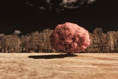 Ball (petrisalonen) Tags: ir720 infrared infraredphotography irphotography tree landscape sun sunlight sunshine light shadows grass red yellow flickr camera finland nature