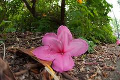 Stanley Park (ruminate) Tags: 2018 bc britishcolumbia canada flowers may nikon nikon90 summer vancouver fisheye fisheyelens may2018 park photowalk stanleypark