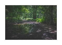 Réflexion en forêt (SiouXie's) Tags: color couleur fujixe2 fuji fujifilm 1855 siouxies nature foret forest reflexion