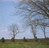 (Cak Bowo) Tags: landscape nature alam surabaya eastjava indonesia kedungcowek lubitel lubitel166 lubitel166u lubitel166universal plasticcamera 120 mediumformat tlr twinlensreflex film kodak ektacolor kodakektacolor160
