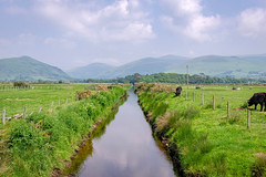 A River Runs Through (Howie Mudge LRPS BPE1*) Tags: landscape nature ngc nationalgeographic sky clouds outside outdoors greatoutdoors river water reflection calm peaceful tranquility grass animals cows sheep hills tywyn gwynedd wales cymru uk dysynni travel sonya6000 sonyalpha sonyalphagang sigma30mmf14dcdn fence bracken gate telegraphposts wires