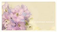 An enchanted moment (c.ferrol) Tags: pastel rosa pink flor bouquet soft suave bokeh