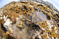 DSC_4900 (Thomas Cogley) Tags: botany bay seaside sea front seafront beach rockpool rock pool fisheye lens nikon 105mm shore
