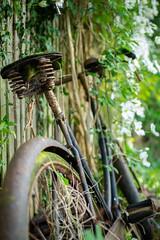 Bike (tristan_design) Tags: bike bicycle overgrown plant flowers rust