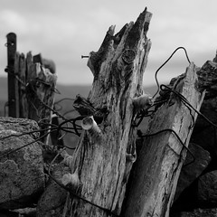 Durness5 (Roddy McIntosh) Tags: durness scotland highlands blackandwhite monochrome bw fencingposts drystonewall timber wood wire